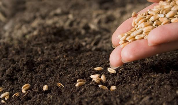 sowing-seedsd